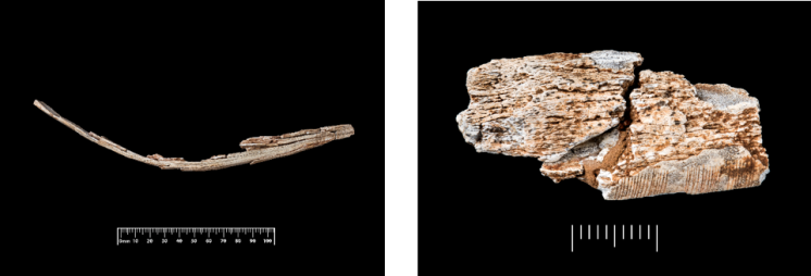 Gough's Cave ivory pieces