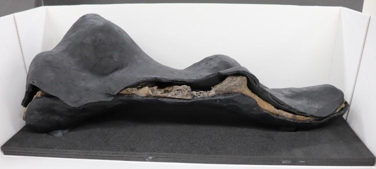 The Clacton rhino skull